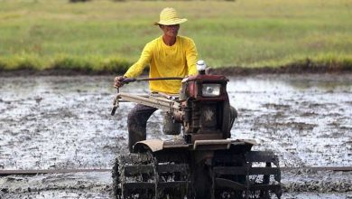 Photo of World Bank agriculture expert recommends PHL drop focus on individual crops