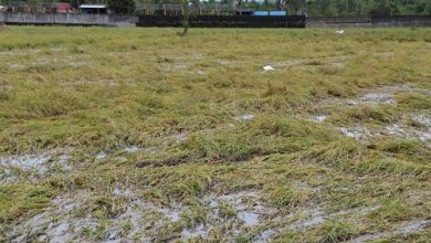 Photo of Agriculture damage from typhoon now at P2.5 billion, says DA
