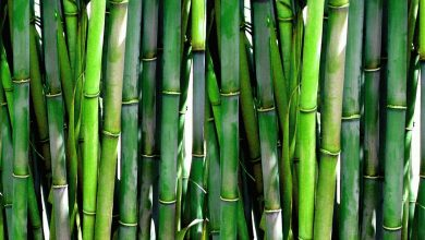 Photo of DENR orders bamboo planting along Cagayan River