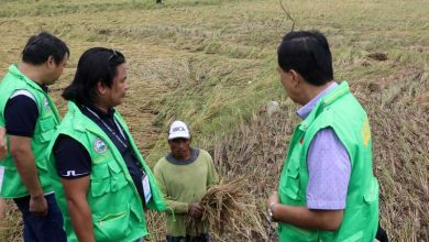 Photo of Typhoons cut 2% of Q4 palay harvest