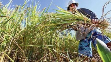 Photo of Senate okays cash aid measure for farmers hit by typhoons