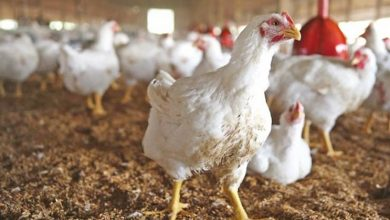Photo of Agri dep't lifts suspension on poultry imports from Brazil