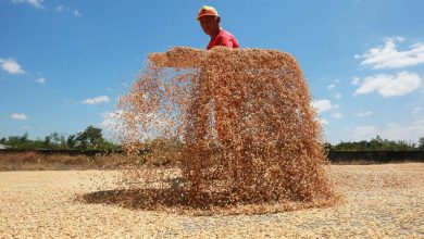 Photo of Farmgate price of palay rises 1.6% in late Nov.