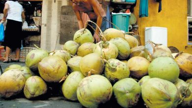 Photo of Coconut, calamansi touted for market potential in Europe