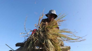 Photo of PHL agriculture may see export recovery this year