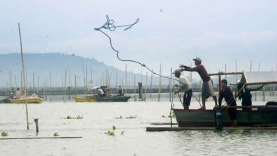 Photo of Fisheries bureau boosts surveillance