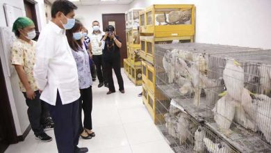 Photo of Pandemic brought new hurdles to curbing lucrative illegal wildlife trade